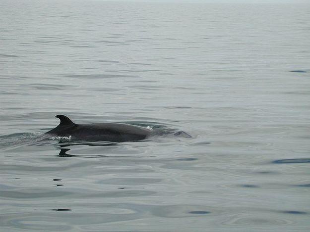fondi fukushima caccia balene