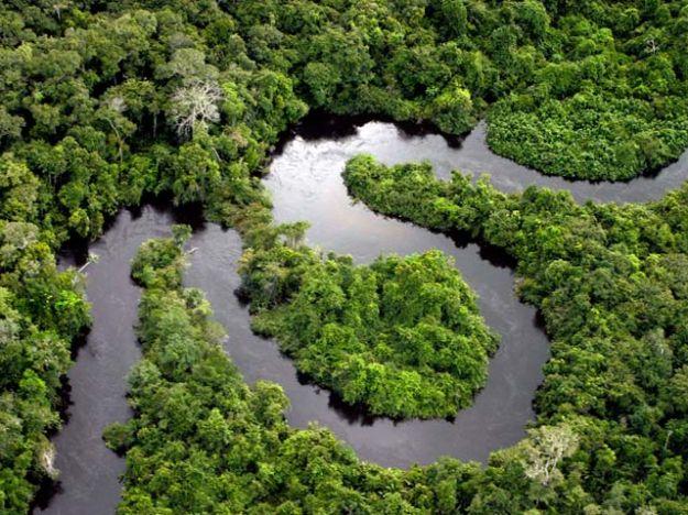 foresta_amazzonica_minore_taglio_alberi