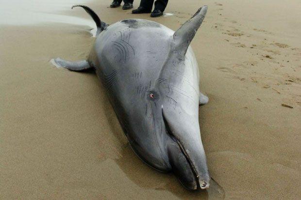 protezione_animali_delfino_spiaggia_puglia
