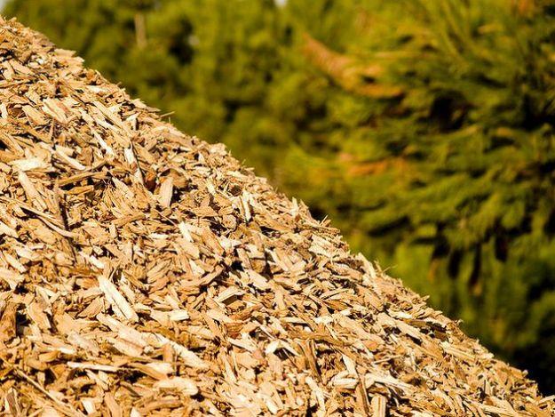 aumento prezzo benzina biomassa non alimentare