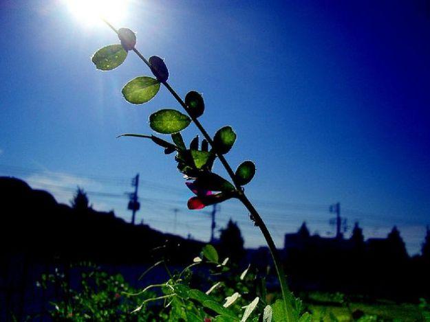 impatto ambientale 2012 regole