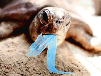 impatto_ambientale_sacchetti_plastica