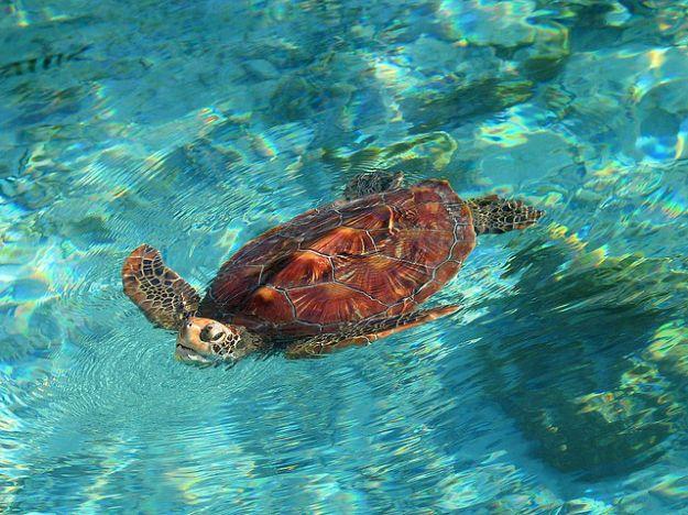 tartaruga_gigante_protezione_animali