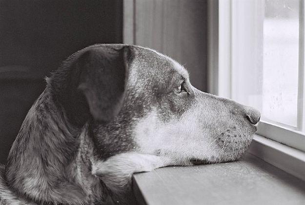 adozione_cuccioli_cane_gatto_bufale