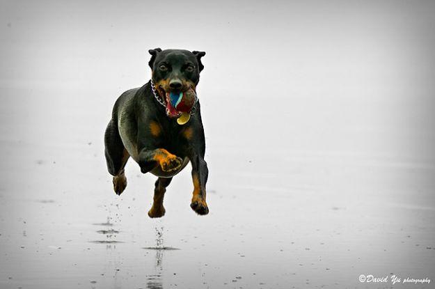 cane_animali_domestici_evoluzione_specie