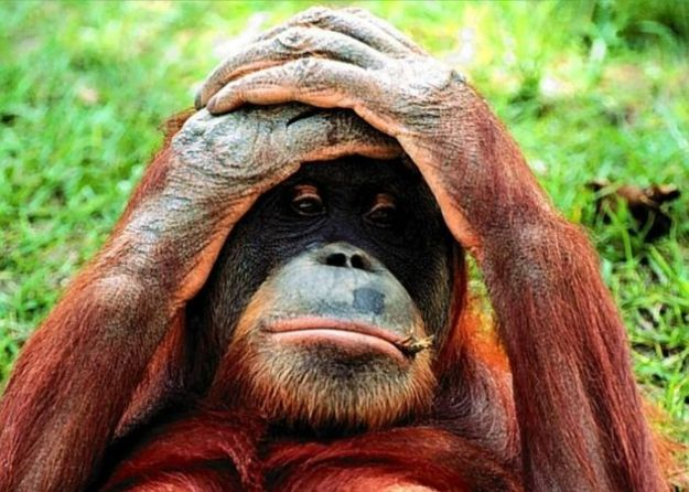 vivisezione monza scimmie