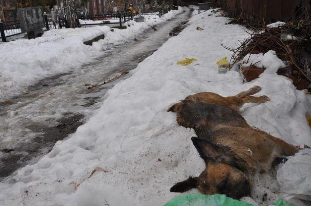 strage cani ucraina