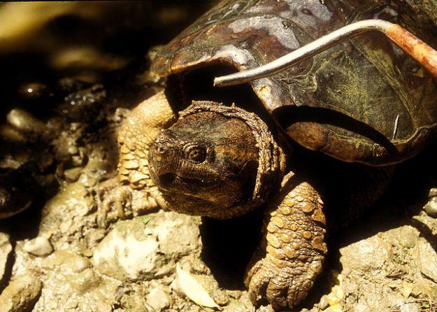 tartaruga_curiosita_regno_animale