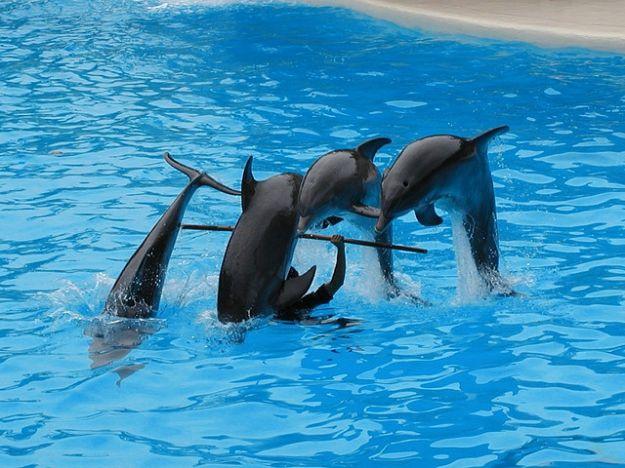 delfini_animali_marini_aggressivi