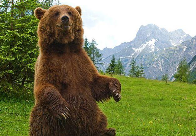 orso bruno fumetti wwf