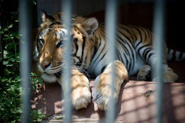 sfruttamento animali zoo sentenza