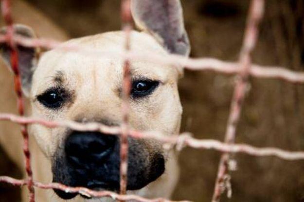 strage cani ucraina manifestazione