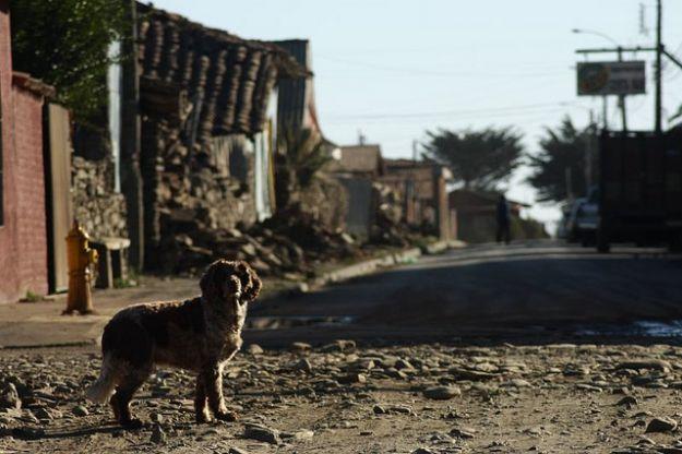 animali_domestici_terremoto_emilia_romagna