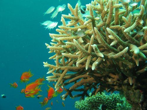 biodiversita_specie_animali_piante