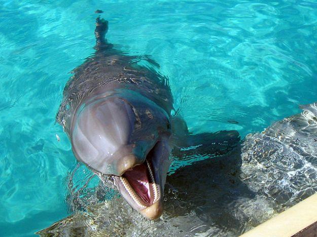 delfini_delfinari_storie_animali