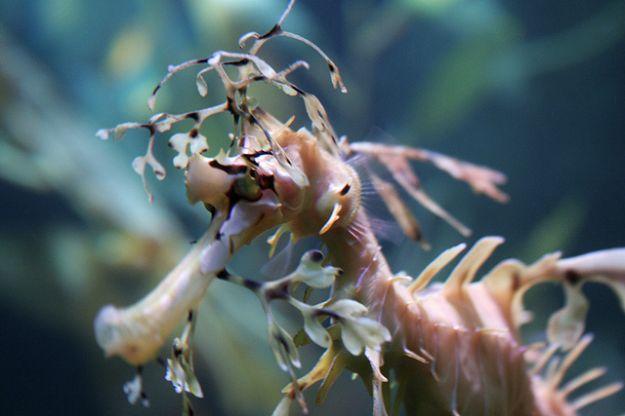 giornata_mondiale_biodiversita_marina