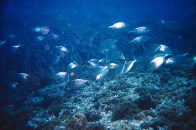inquinamento mare rifiuti plastica vento