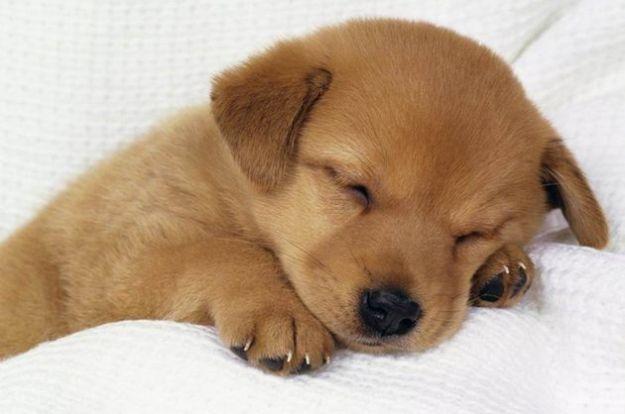 rimedi naturali pulci cani