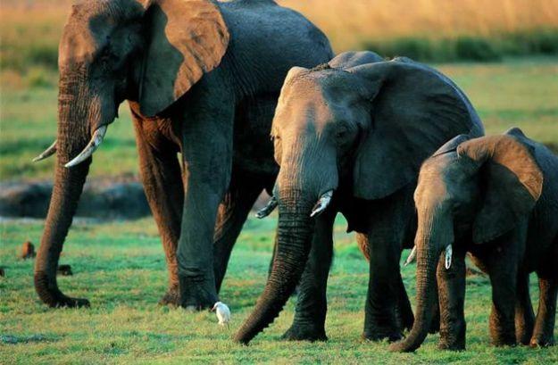 strage elefanti congo