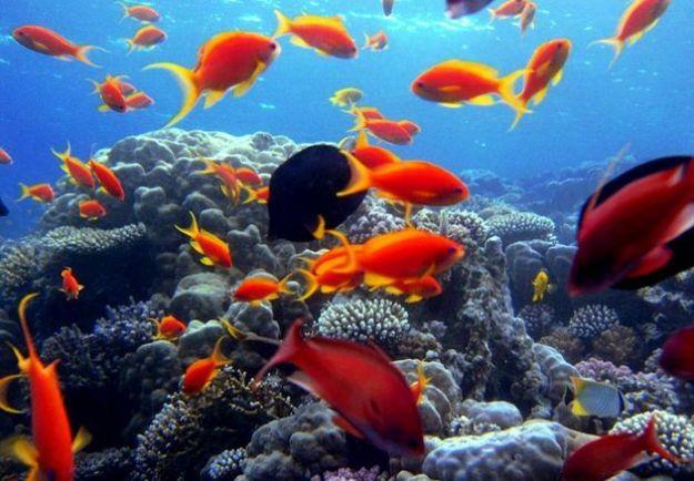 barriera corallina vulcani