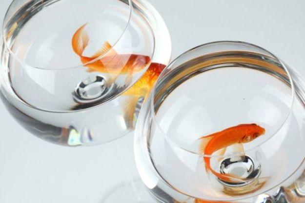 pesci rossi bocce vetro