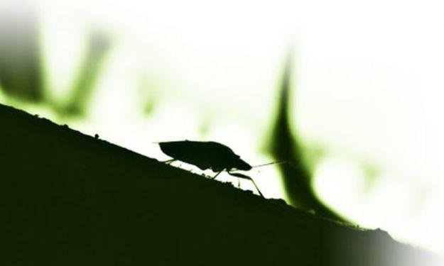 rimedi naturali scarafaggi