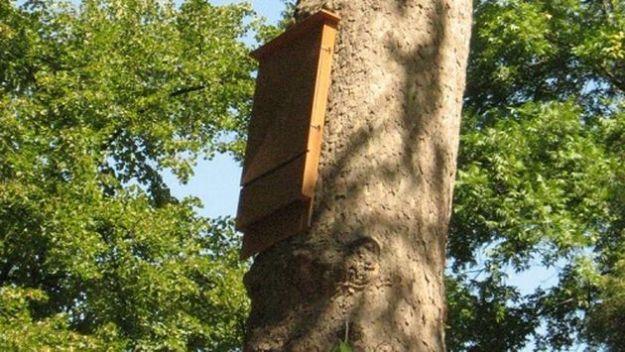 rimedi naturali zanzare pipistrelli