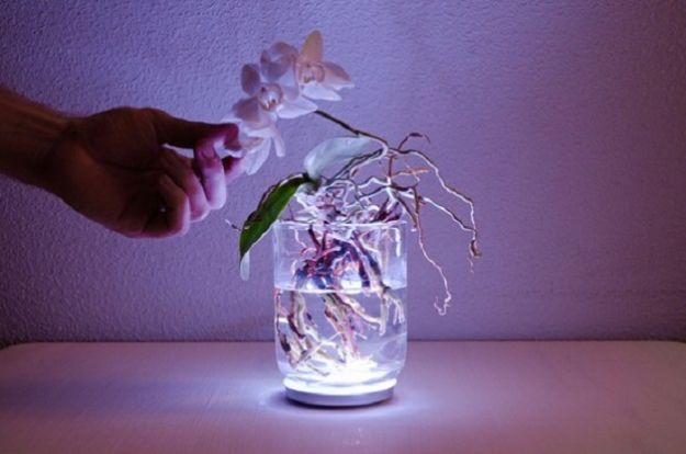 aura lampada vivente