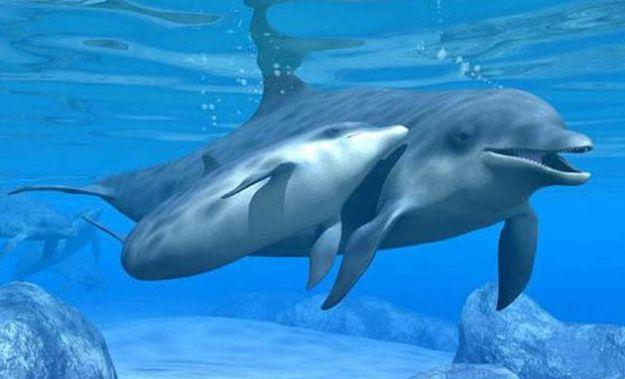delfini intelligenti spugne prede