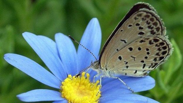 disastro fukushima farfalle malformazioni radiazioni