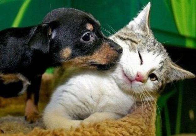 animali domestici cani gatti condomini