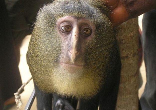animali strani scimmia volto umano