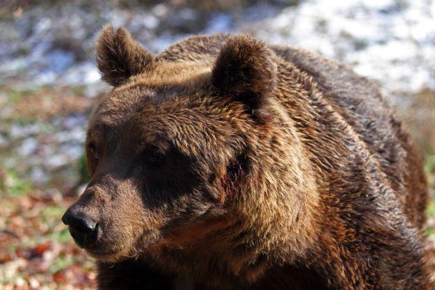 parco abruzzo orso marsicano
