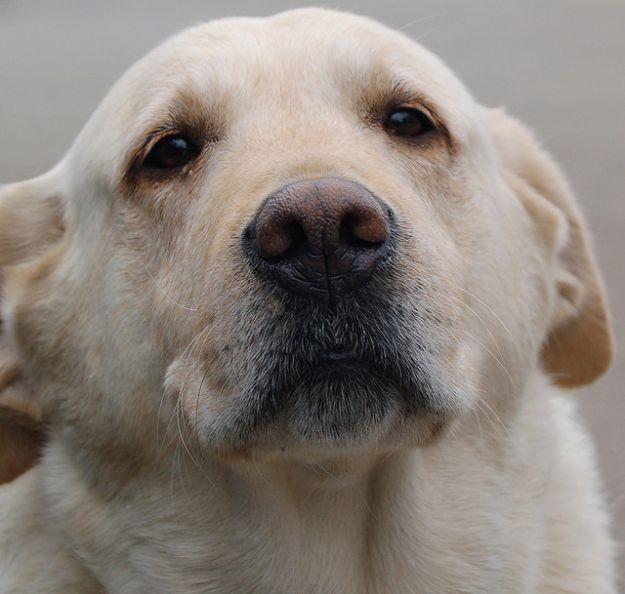 cane lasciato senza cibo
