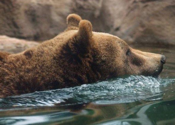 orso marsicano tutela europa