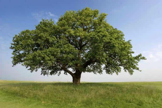 bare ecologiche urne bio natura