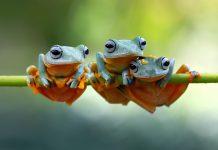 Gli animali anfibi più strani del mondo