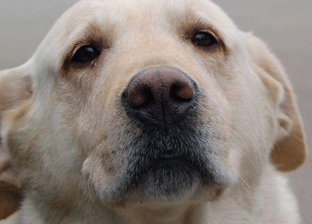 cibo tossico per cani