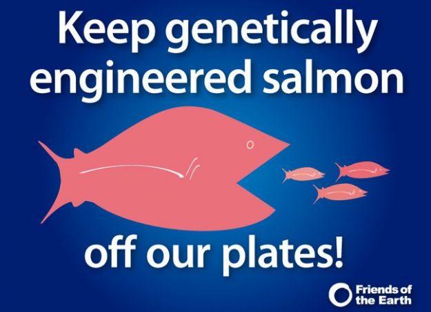 salmone ogm