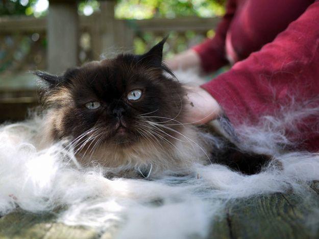 Rimedi naturali per la cura del gatto