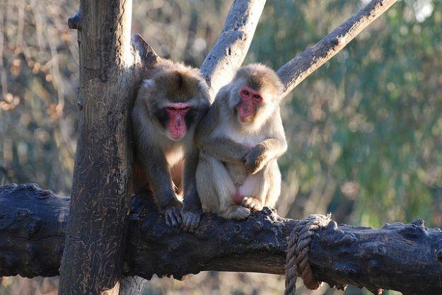 scimmie maltrattamenti