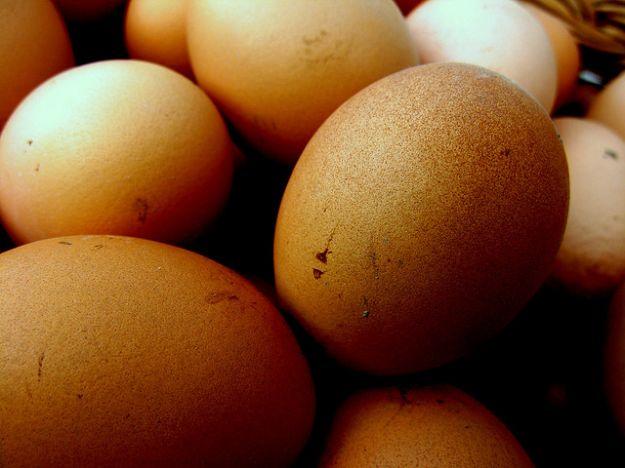 diossina nelle uova