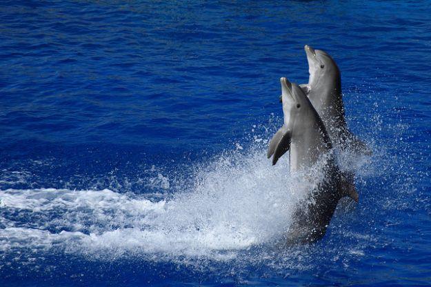 delfini in mare