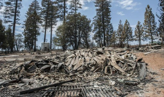 prodotti deforestazione