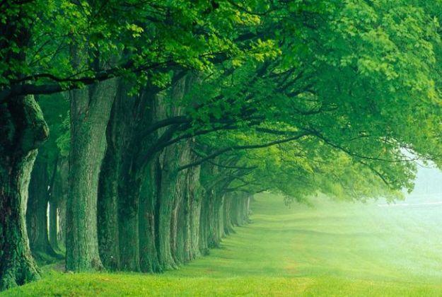test che albero sei
