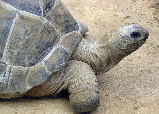 animali piu longevi del mondo