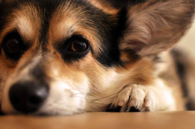 motivi per adottare un cane