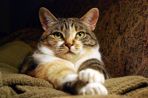 motivi per adottare un gatto