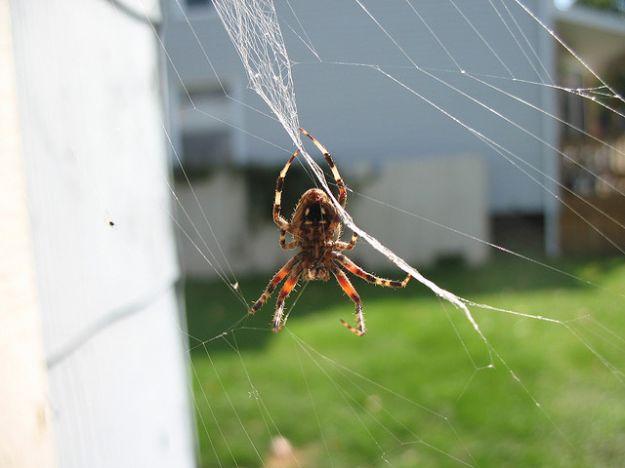 allontanare i ragni naturalmente