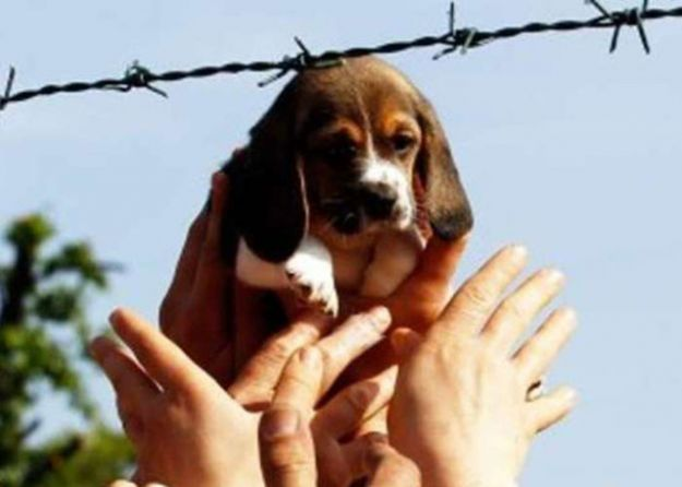 contro la sperimentazione animale